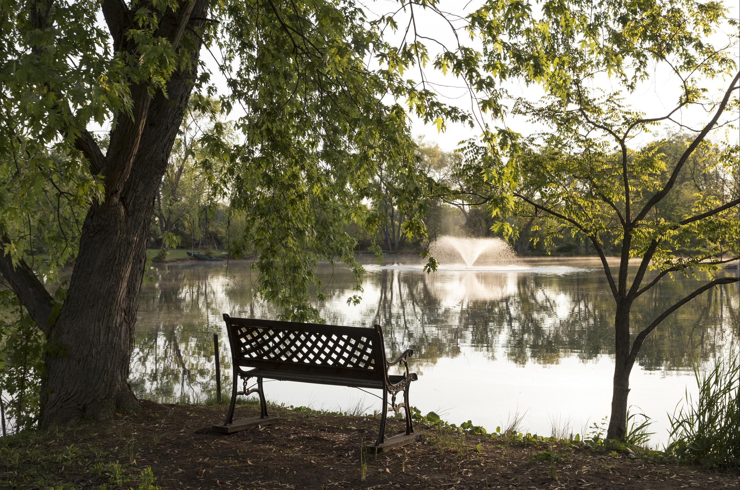 shaded-bench-overlooking-lake.jpg